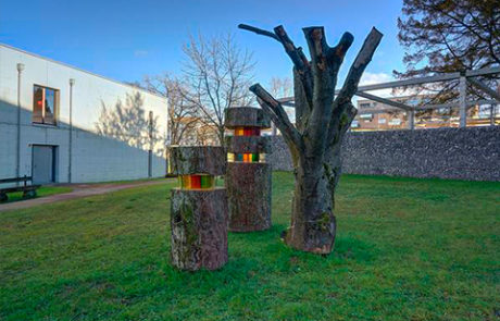 Baum, Jahresringe, Stiftung Kronbühl, Vergangenheit, Erinnerungsstück