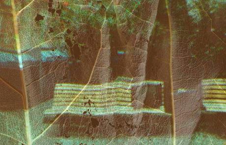 poetisch, Projektionen, Blattgerippe, Zellstrukturen, Augenblick des Erinnerns