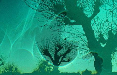 Tanz der Schattenfiguren, Winterstarre, Erinnerung und Erwartung